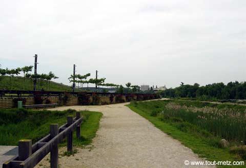 Parc de la Seille à Metz rosier