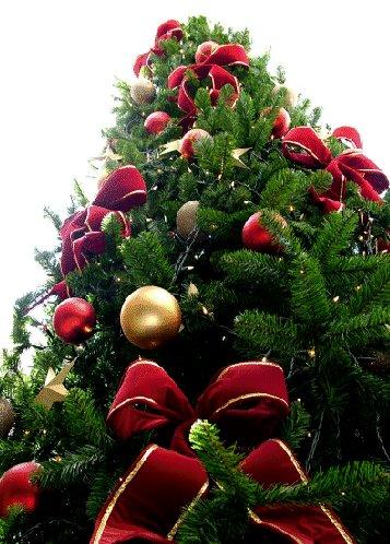 Le grand sapin de Noël investit la Place de Chambre