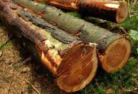 Bois biomasse
