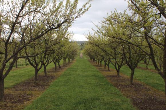 Jardins de laquenexy en nouvelle z lande en 2013 - Jardins fruitiers de laquenexy ...