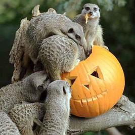 Fêtez Halloween au zoo d'Amnéville