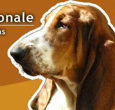 Exposition canine à Metz Expo : des animations qui ont du chien