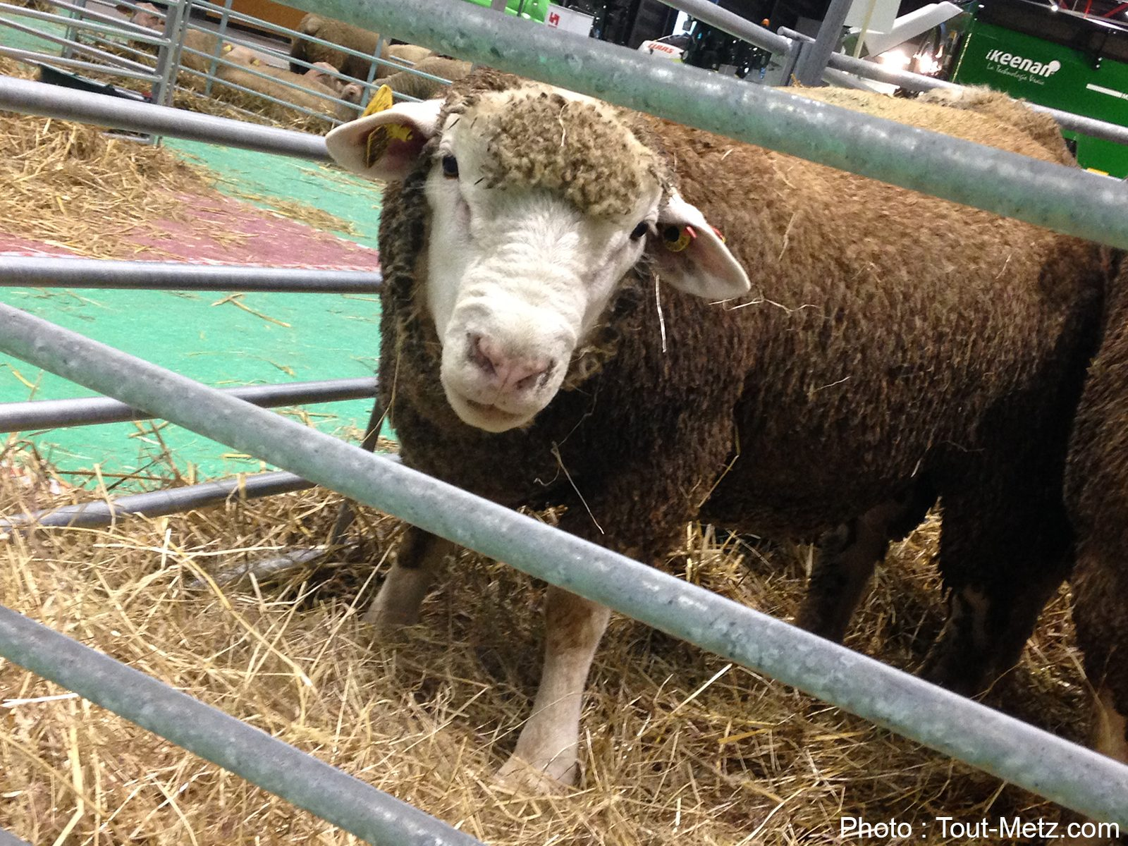 Photo de Val'Emploi à Blénod : le rendez-vous des métiers de l'agriculture