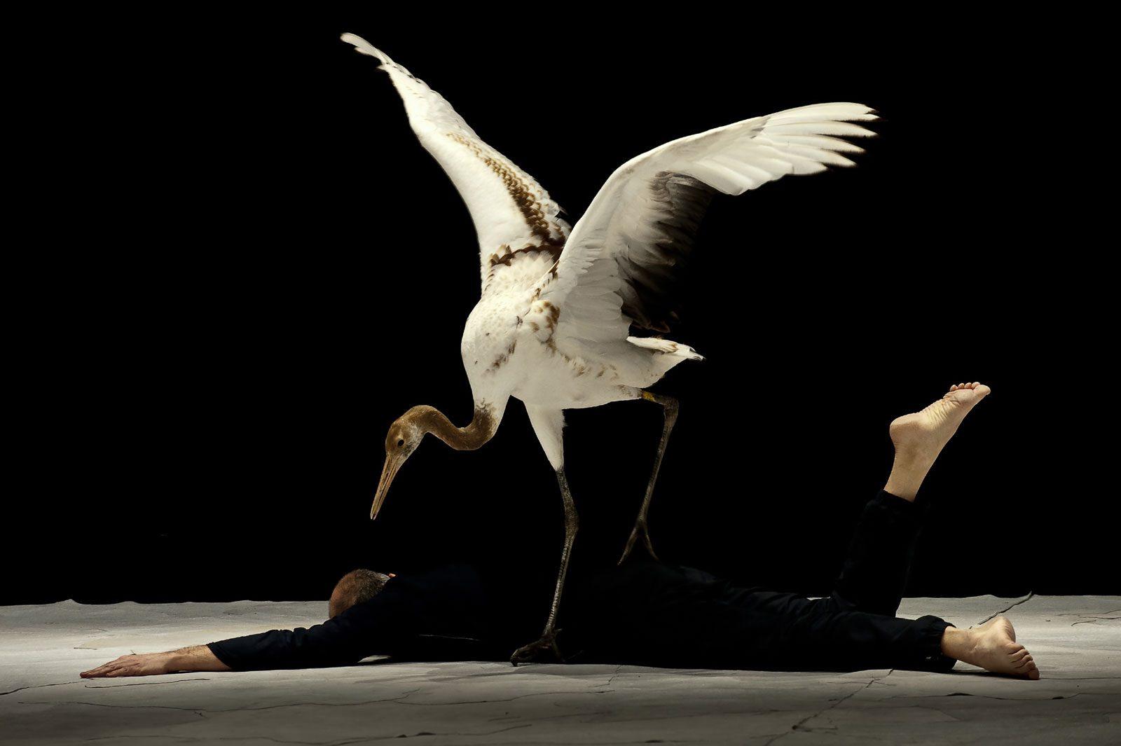 «Light Bird» à Metz : un spectacle rarissime bientôt à l'Arsenal