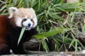 Parc animalier de Sainte-Croix : ouverture exceptionnelle durant les vacances scolaires d'hiver