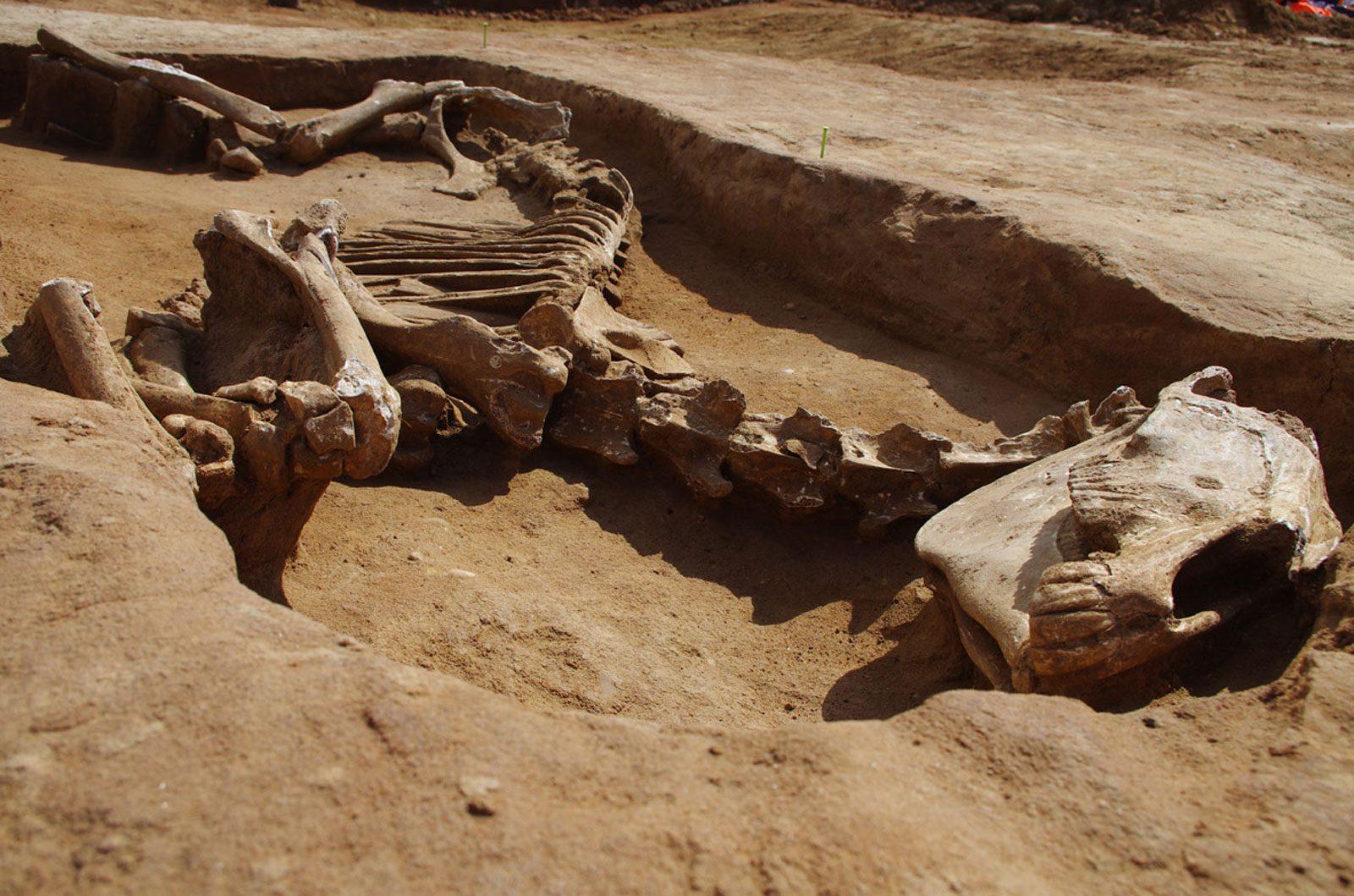 Fouilles archéologiques à Woippy : cadavres et squelette de cheval découverts (photos)