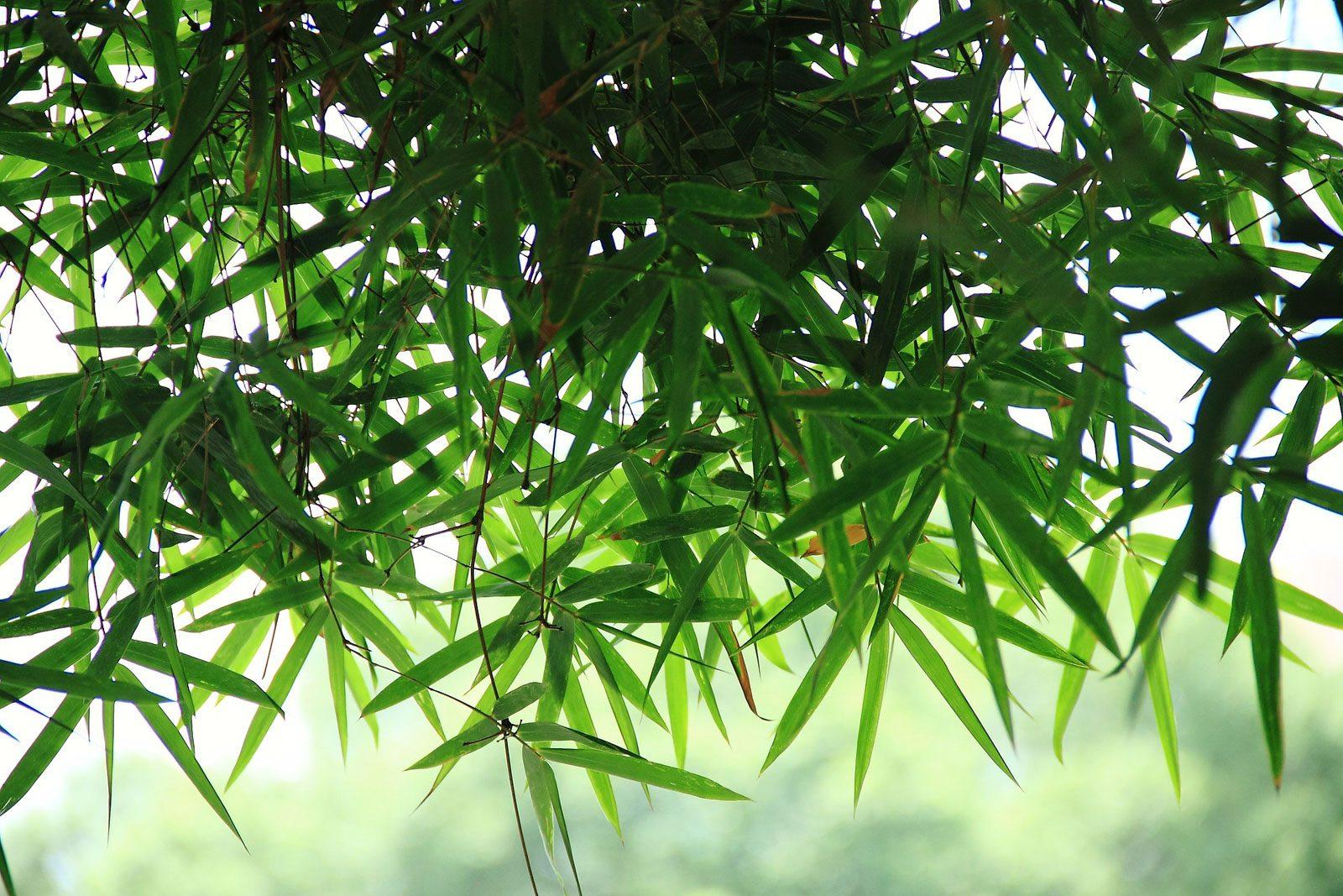 Metz Plage : 800 plantes à vendre, de 6€ à 169€
