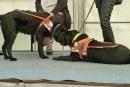 Visites et démonstrations à Woippy : l'École des chiens guides de l'Est ouvre ses portes