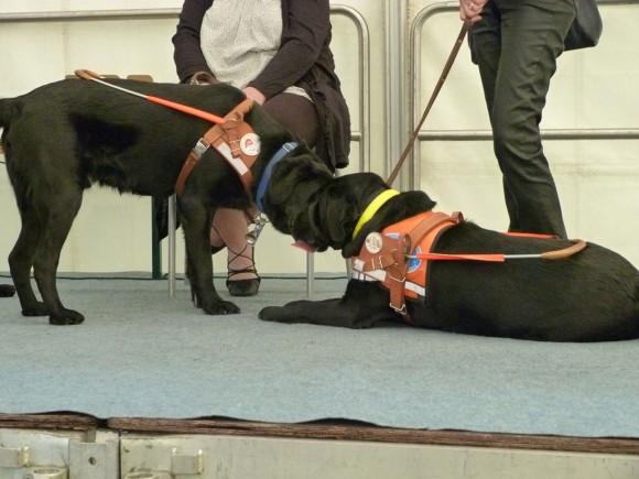 Photo : Association des chiens guides de Woippy