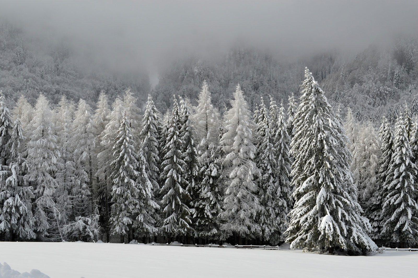 Le retour de la neige dans les Vosges