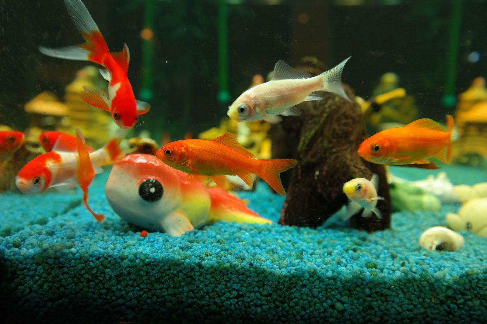 Bourse aux poissons à Marly ce dimanche