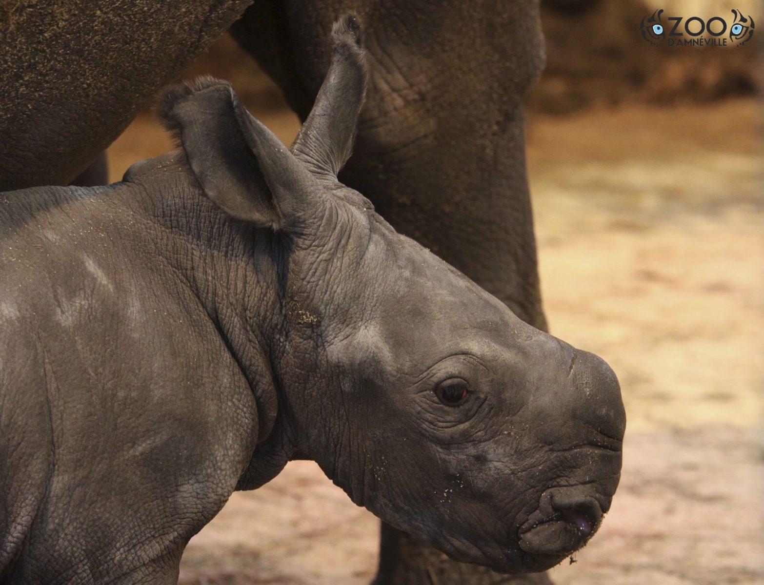 Le Zoo d'Amnéville ouvre ses portes en nocturne