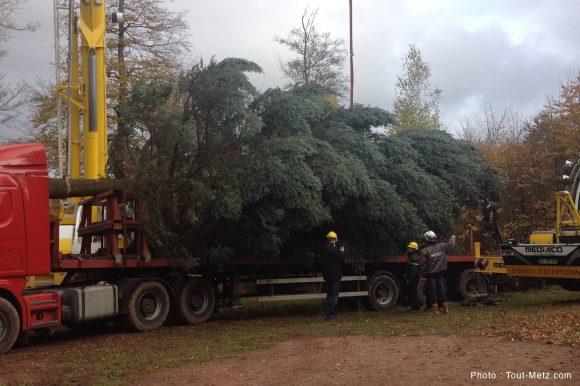 Le sapin de Noël prêt à être transporté