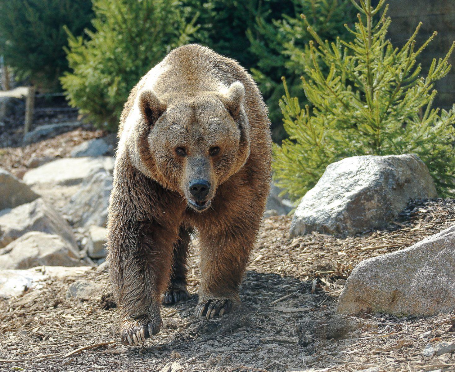 Photos : deux nouveaux pensionnaires au Zoo d'Amnéville