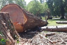 Photo of Metz : abattage d'arbres malades ou morts
