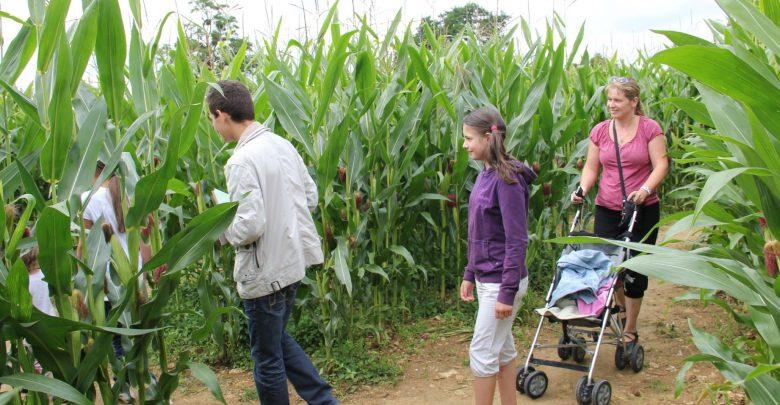 Photo de Labyrinthe en Lorraine : un défi à relever en famille