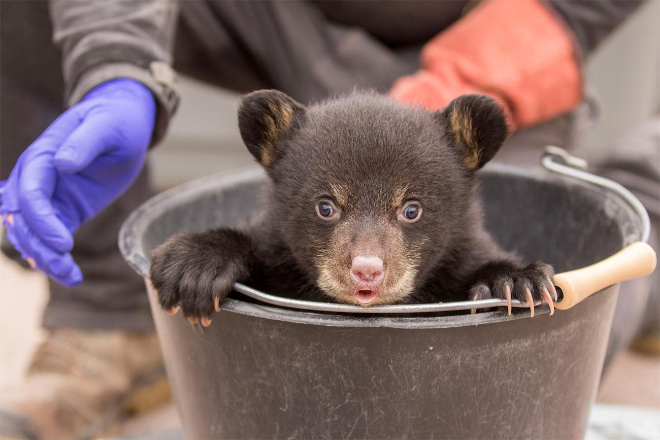 Photo de Rhodes : le parc animalier de Sainte-Croix élu 5ème meilleur parc d'Europe